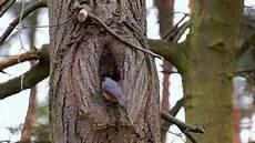 welcher vogel baut welches nest kleiber baut nest