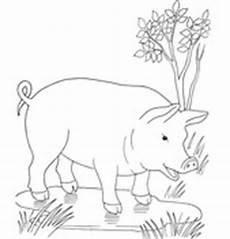 Lustige Schweine Ausmalbilder Lustige Schweine Ausmalbilder Zeichnen Und F 228 Rben