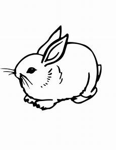 realistic image of a sweet bunny coloring page