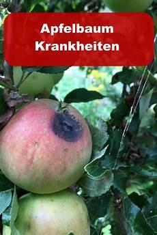 apfelbaum krankheiten 187 gartenbob de der gartenratgeber