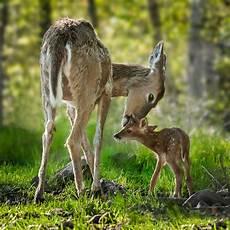 wildlife topics national wildlife day september 4 2019 national today