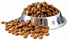 croquette chien food premium kibble options that your will
