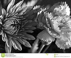 fiori in bianco e nero black and white flowers stock photo image 24850