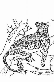 Ausmalbilder Erwachsene Leopard Ausmalbild Tiere Panther Ausmalbilder1001 De