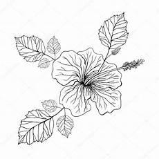 Micky Maus Malvorlagen Roblox Hawaii Blume Malvorlage