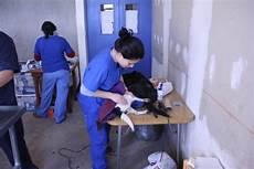 test ingresso veterinaria test veterinaria 2013