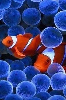 malvorlagen quallen jung wundersch 246 ne korallen in der tiefe und farbenfrohe