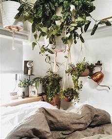 h 228 ngepflanze zimmerpflanzen urban jungle