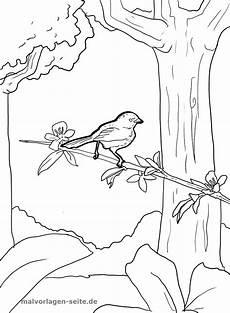 malvorlage vogel im baum