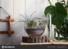 vasi per cactus vasi di vetro decorativi con cactus e succulente foto