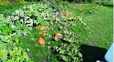 hokkaido kürbis anbauen chaosgarten hokkaido ernte 2013 ca 60 kg