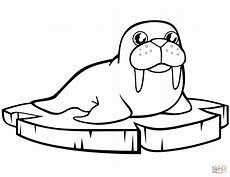 cartoon walrus the ice floe coloring page free printable coloring pages