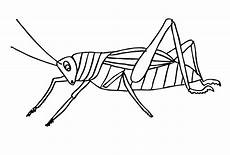 ausmalbilder zum drucken malvorlage insekten kostenlos 2