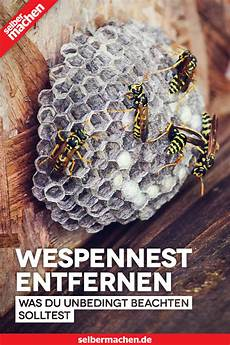 wespennest entfernen antrag kosten strafe wespennest