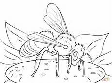 european honeybee coloring page free printable coloring