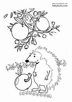 Ausmalbild Igel Im Laub Herbst Ausmalbilder Herbstmotiv Herbstlaub Tiere