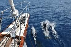 in barca a vela a sant antioco delfini tra l isola di sant antioco e l isola di san pietro