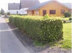 Putz Für Bad - mehrfamilienhaus in wohnsiedlung mit einer gelben fassade
