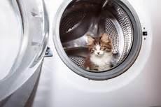waschmaschinen mit pet hair removal 187 tierhaar ratgeber de