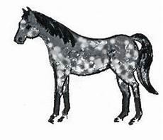 cavallo pomellato nuova collezione pomellato cavallo
