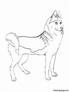 siberian husky coloring page coloring pages