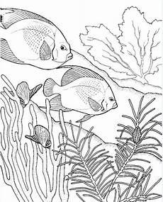 fische ausmalbilder f 252 r erwachsene kostenlos zum