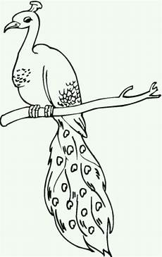 peacock coloring pages coloring pages