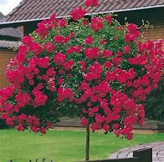 arbre décoratif extérieur 29450 arbre pleureur d 233 coration 233 l 233 gante et gracieuse