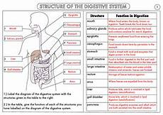 gcse biology digestion topic resource updated by beckystoke teaching resources