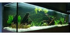 suche aquarium und fische zu verschenken in m 252 nchen