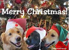 talking dogs at for love of a dog merry christmas from talking dogs and for love of a dog jewelry