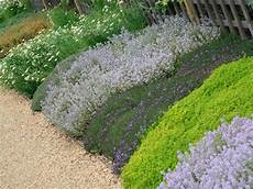 couvre sol sans entretien how to landscape with groundcover diy garden projects