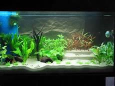 Knochenhartes Wasser Und Trotzdem Aquarium Forum