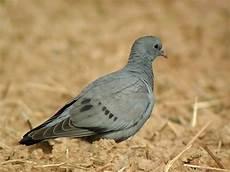 Eloigner Les Pigeons Le Guide Anti Pigeon 2018