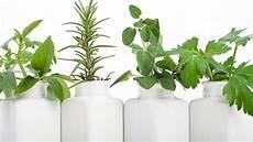 erde oder hydrokultur pflanzenhaltung ohne erde hydrokultur paradisi de