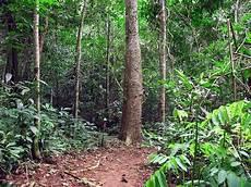 Pengertian Definisi Istilah Arti Kata Tipe Tipe Hutan