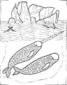 Malvorlage Viele Tiere Viele Finnwale Ausmalbild Malvorlage Tiere