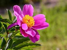 fiori e la bellezza di piante e fiori dimensione suono soft