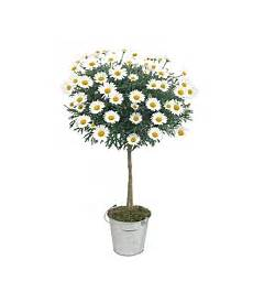plantes par correspondance vente fleurs par correspondance l atelier des fleurs