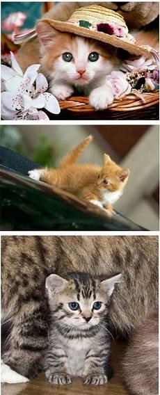 20gambar Koleksi Gambar Kucing Yang Seriusly Cuteness