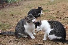 Sekamar Rindu Gambar Inilah Kucing Yang Cemburu