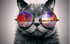 Katze Mit Sonnenbrille - chill cat with sunglasses gets thrown into a