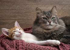 dogs cats kittens pets farm working animals health safety tips for beating the