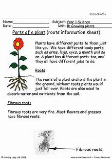 science worksheets on plants for grade 4 13724 primaryleap co uk parts of a plant roots information sheet worksheet parts of a plant
