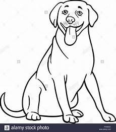 Ausmalbilder Hunde Labrador Labrador Retriever Hund Zum Ausmalen Stockfoto