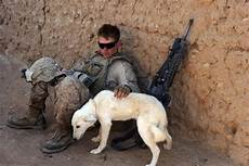 Wars Hund - 20 things you never knew about america s war dogs
