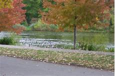 ellison park in rochester new york