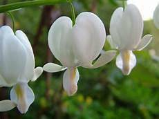 Gambar Alam Mekar Menanam Putih Daun Bunga