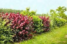Quelle Haie Choisir Pour Votre Jardin Conseils Et Astuces