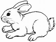 Malvorlage Hase Gratis Free Printable Rabbit Coloring Pages For